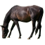 Criswood II Horse Boarding