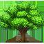 Tree/Shrub Care