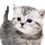 Feline Viewing Options