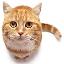Adopt a Cat!